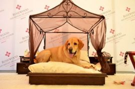 Amenities for dogs and cats for comfortable stay