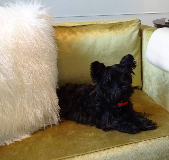 A little furry guest enjoying his stay at Rosewood Hotels and Resorts