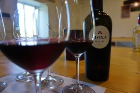 Tasting Zisola Wine