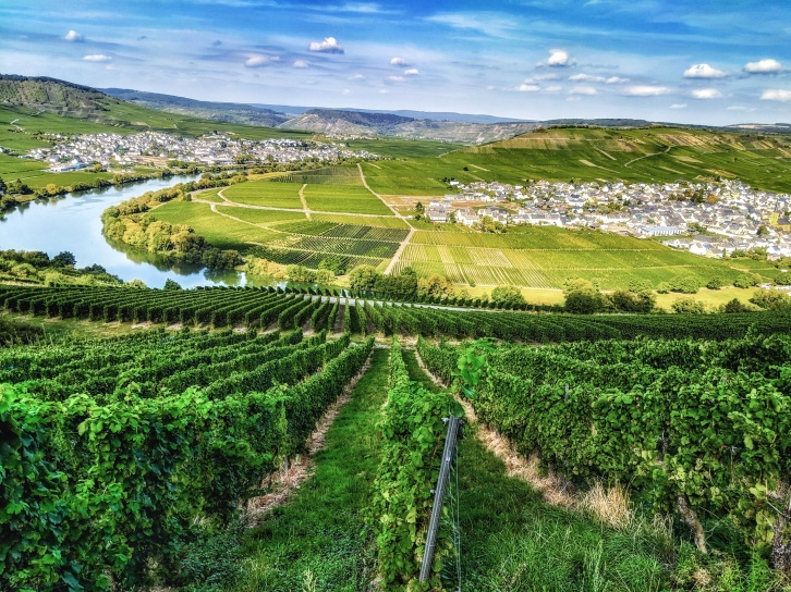Mosel River Valley at Lowein. Image Courtesy: Neha Wasnik