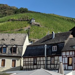 Weingut Dr H Thanisch vineyard seen from Bernkastel Kues town center. Image Courtesy: Neha Wasnik