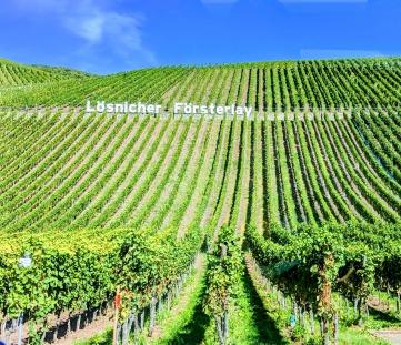Vineyards along Mosel, Germany. Image Courtesy: Neha Wasnik