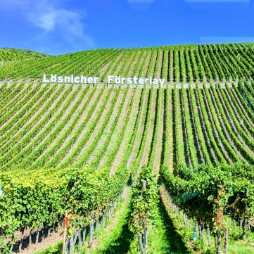 Vineyards along Mosel, Germany. Image Courtesy: Neha Wasnik